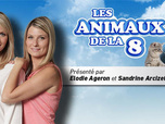 Replay Les animaux de la 8