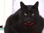 Replay La vie secrète des chats - Queeny, le seul chat qui ne sort pas la nuit