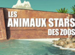 Replay Animaux stars du zoo