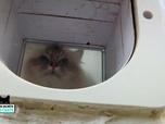 Replay La vie secrète des chats - Astuce : comment inciter les chats à utiliser leur chatière