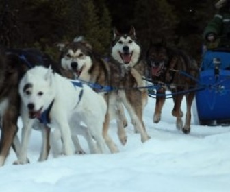Replay Anchorage, ville sauvage - S1 : Entre chiens et loups