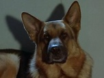 Replay Rex, chien flic - S3 E5 : Le secret d'Anna