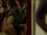 Replay Rex, chien flic - S16 E8 : Nuit blanche