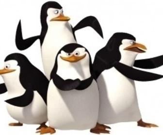 Les Pingouins de Madagascar replay