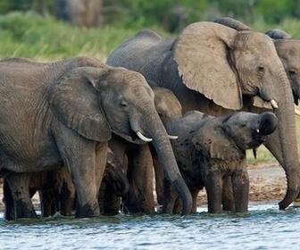 Echo et les éléphants d'Amboseli replay