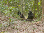 Replay Together For Good Wildlife Special - Protecting the Chimps