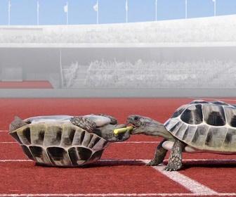 Replay Athleticus - Course de relais