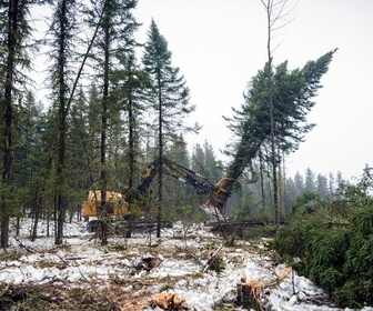 Replay Les forêts du Grand Nord