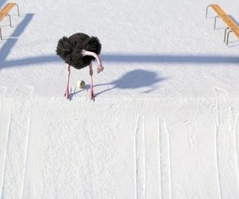 Replay Athleticus - Skicross