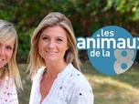 Replay Les animaux de la 8 - Émission du 18 oct. 2020